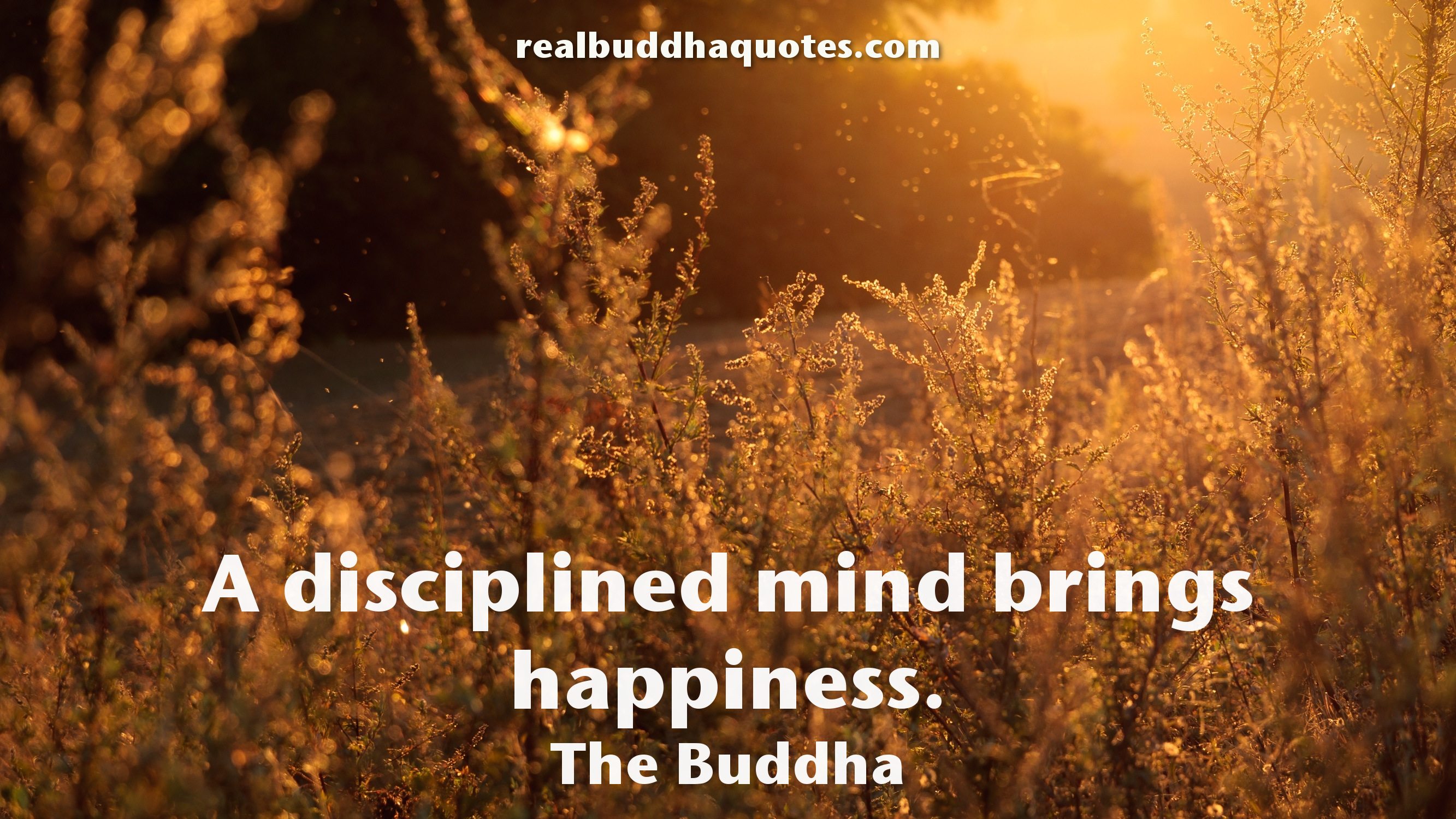 Buddha Quotes On Happiness Mesmerizing Happiness  Real Buddha Quotes