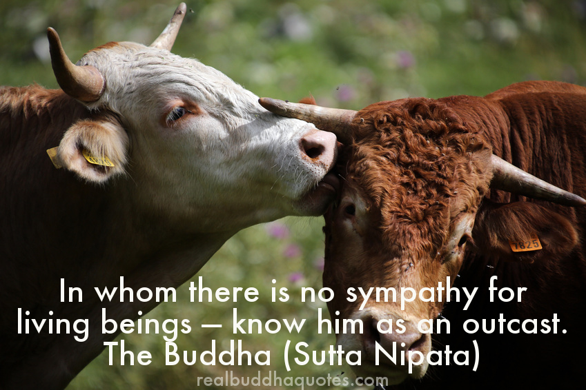 in whom there is no sympathy