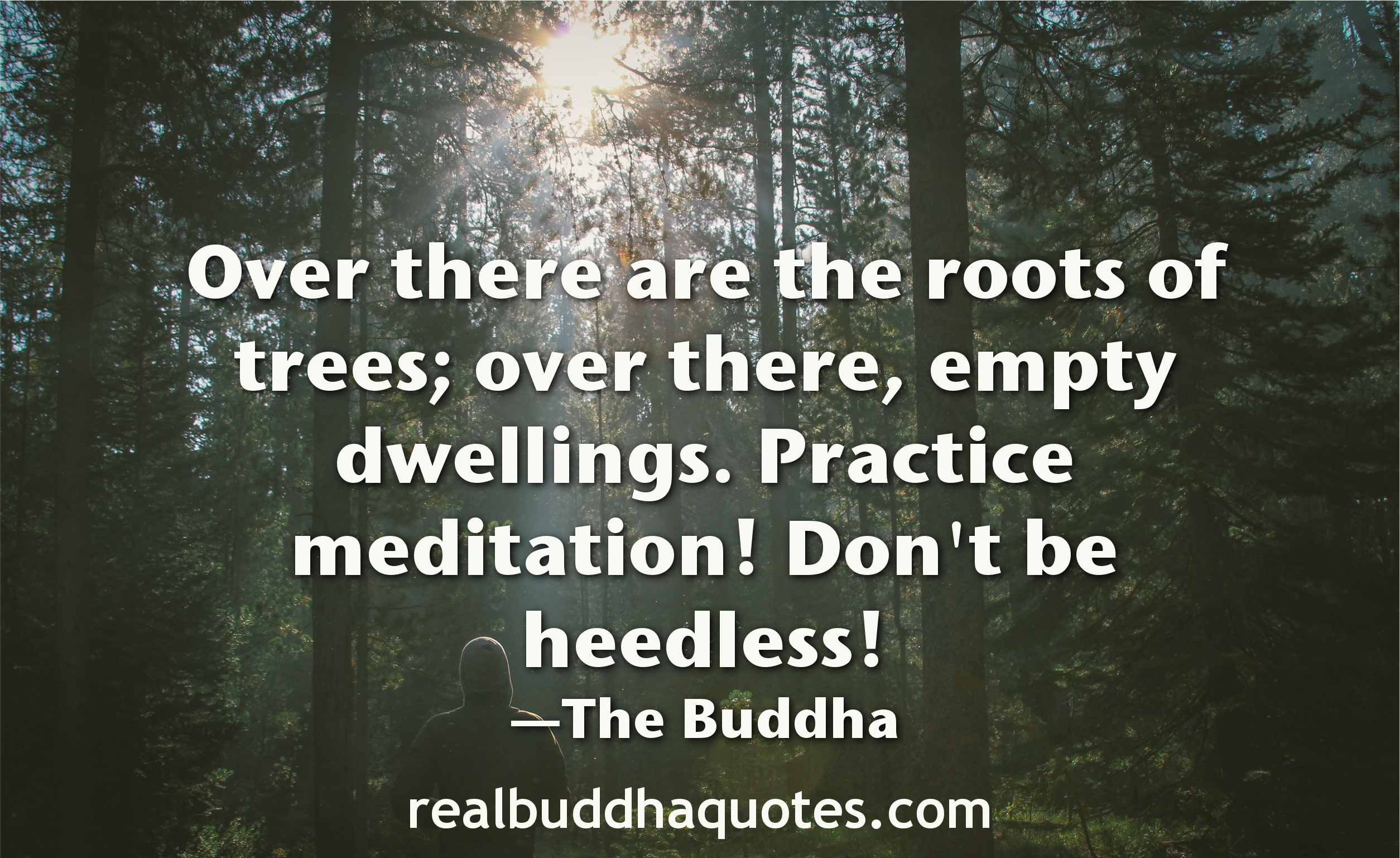 Real Buddha Quotes Over There Are The Roots Of Trees Over There Empty Dwellings